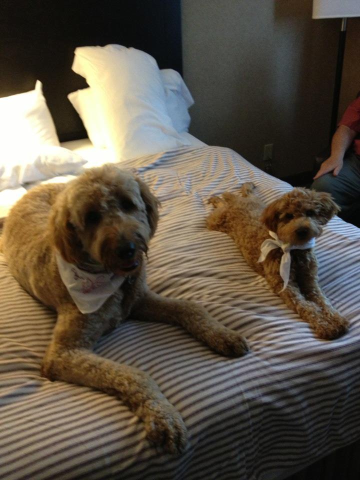 Hotel room fun!